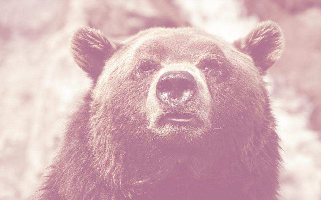 Markkinoinnin nukkuva karhu